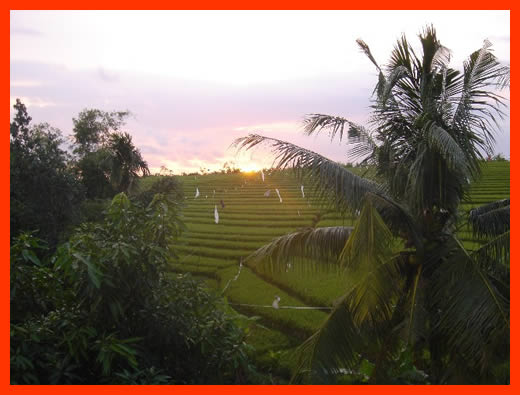 Since I had a WA sunset in my last blog from my place there I thought I would give you a look at the sunset from my place up here in Bali.
